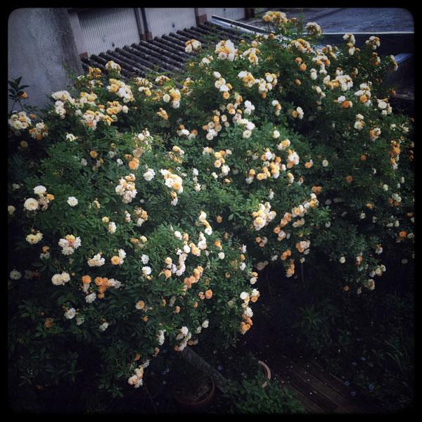 ghislaine de féligonde est en fleur !