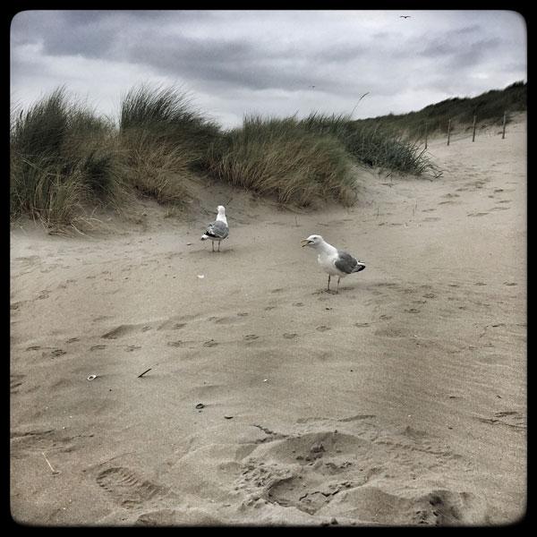 cela discute ferme sur le sable