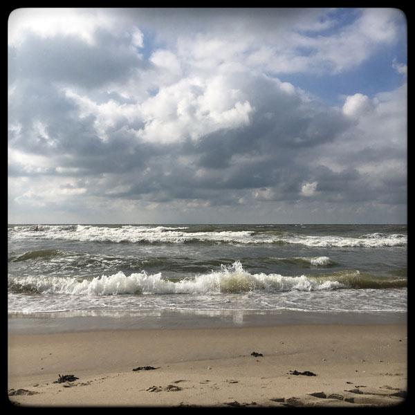 sur le plage : 27 mouettes, 3 chiens et 3 humains