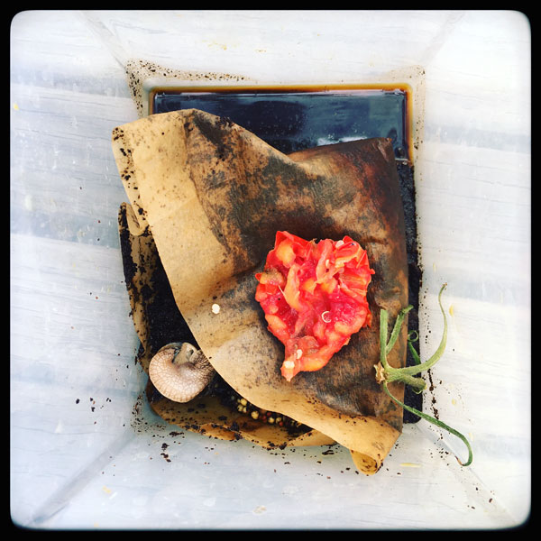 nature morte d'un futur compost