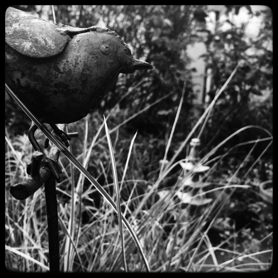 l'oiseau de fer