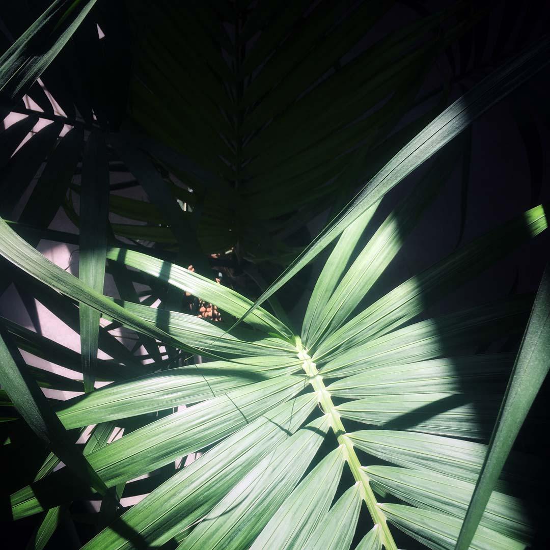 un petit coucou depuis la fraicheur des tropiques !