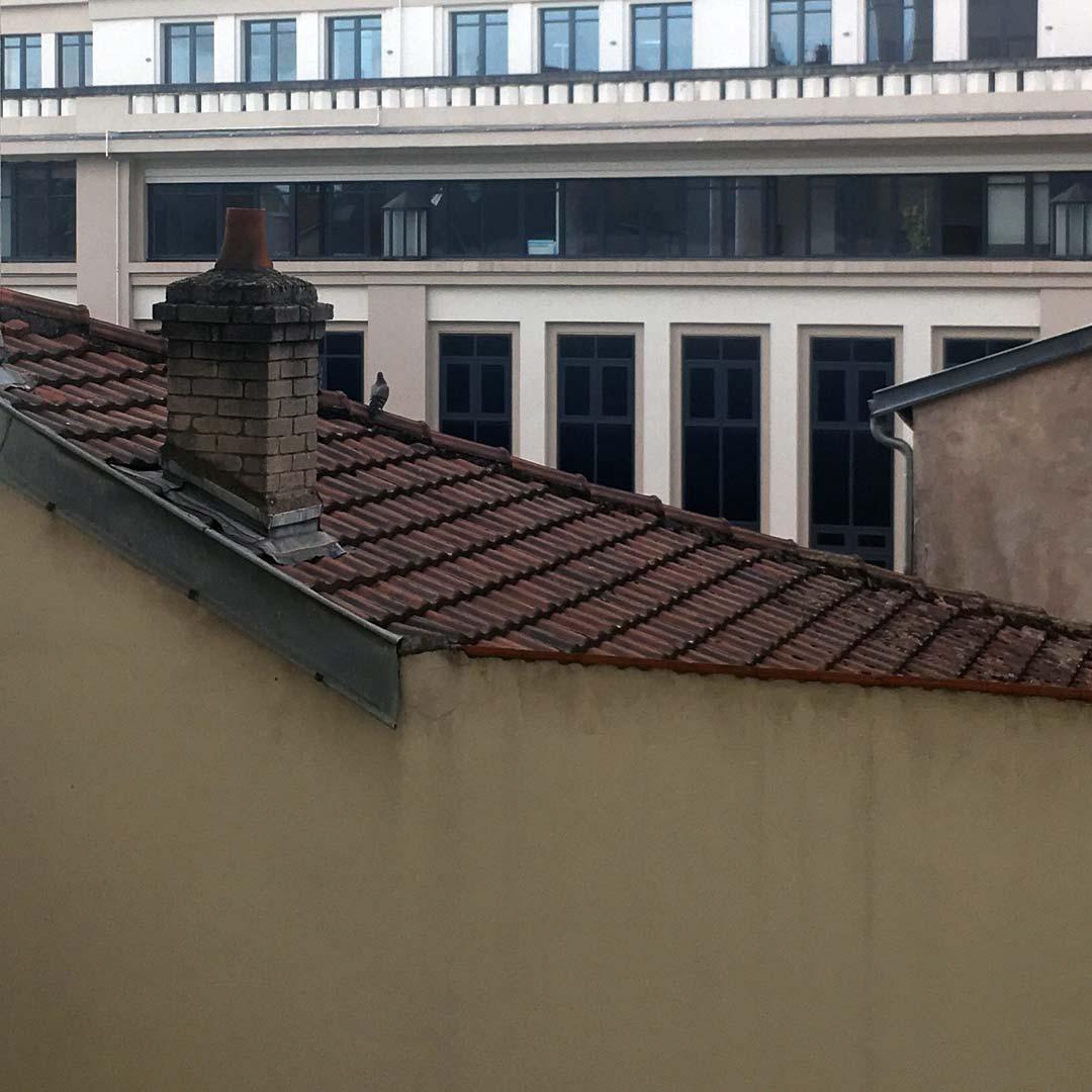 tu le vois le pigeon !